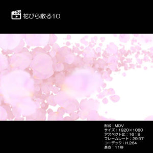花びら散る10(さくら)