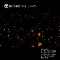 花びら散る/紅葉13-2(ループ)