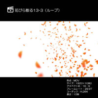 花びら散る/紅葉13-3(ループ)