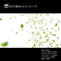 花びら散る/新緑14-3(ループ)